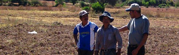 trabajadores en cocecha de maní en Bolivia