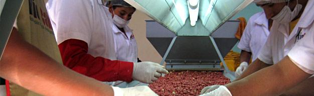 Procesamiento de Maní en Bolivia, Agrinuts