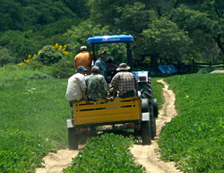 Producción de Maní Mecanizada en Bolivia